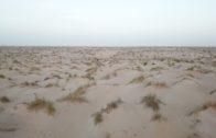 deserto sahara Fede