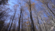 foreste casentinesi foto