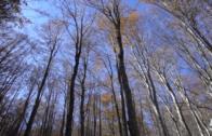 Alla scoperta delle Foreste Casentinesi con Nuove Acque